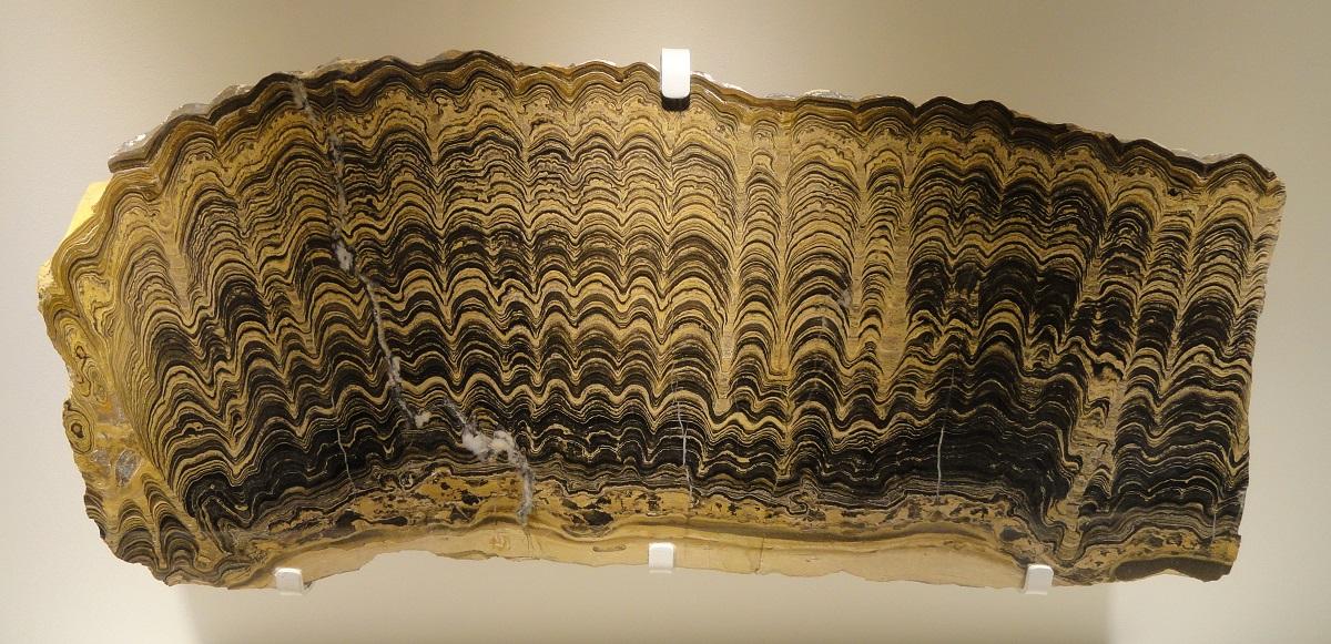 Che cosa sono le stromatoliti?