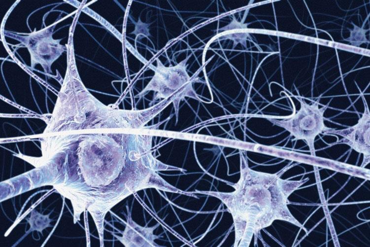 Fino a che età si formano nuovi neuroni?