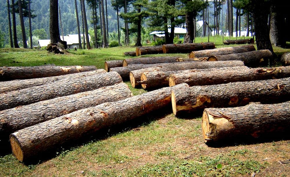 Quanti alberi vengono abbattuti ogni giorno?