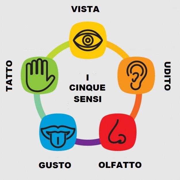 È vero che abbiamo cinque sensi?