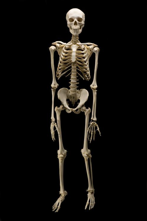 I bambini hanno più ossa degli adulti?
