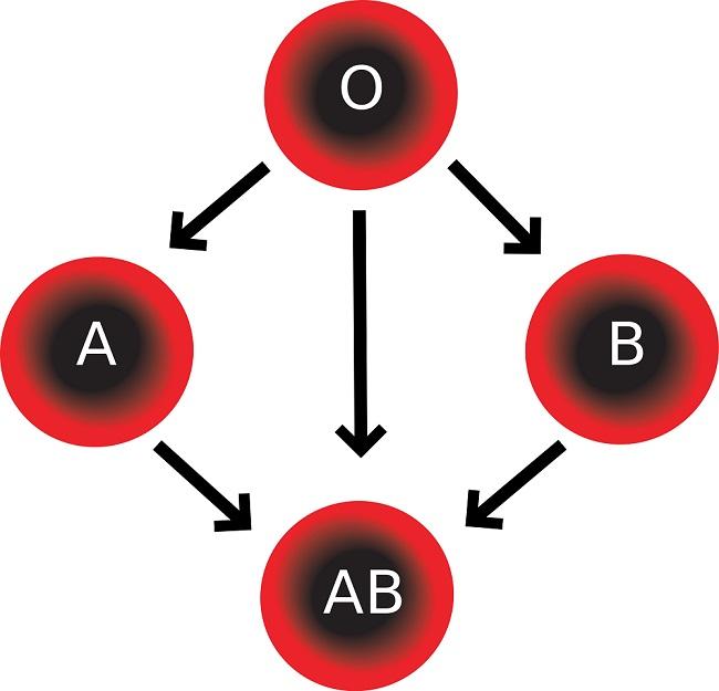 Come si determina il gruppo sanguigno?