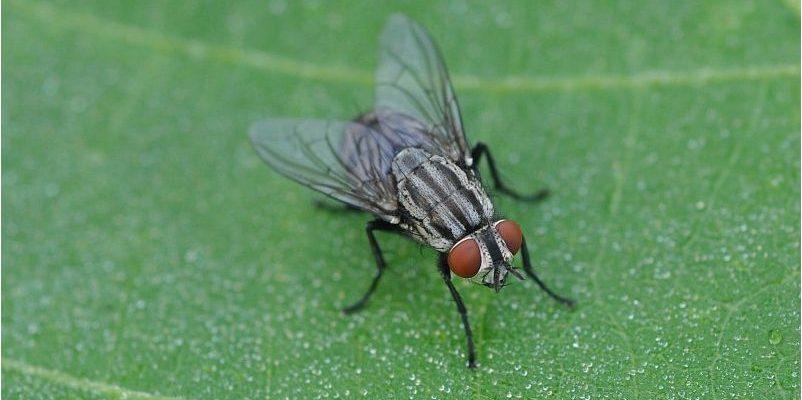 Come liberarsi dalle mosche?