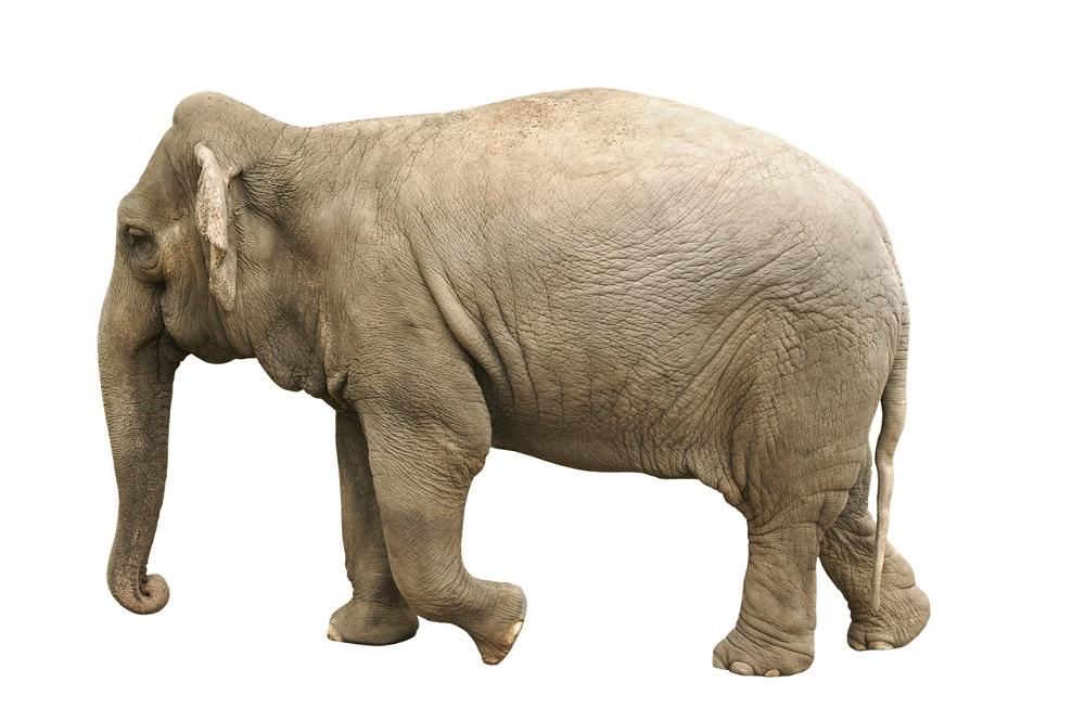 È vero che gli elefanti compiono riti funebri?