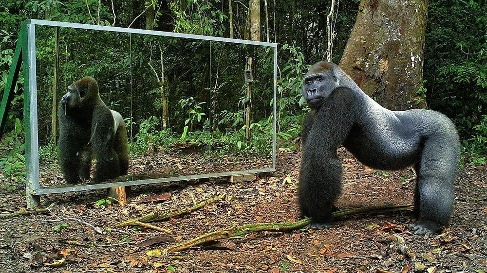 Gli animali si riconoscono allo specchio?