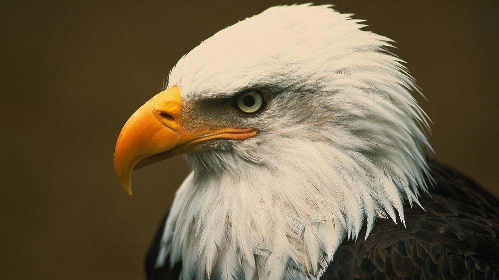 Quali sono gli animali con la vista più acuta?