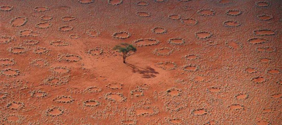 """Cosa sono i """"Cerchi delle Fate"""" che appaiono e scompaiono in Namibia?"""