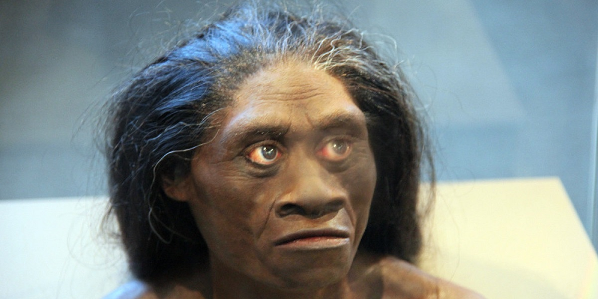 Hobbit in Indonesia, Homo floresiensis