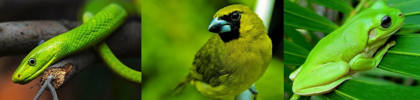 Rettili, uccelli e anfibi sono verdi, ma esistono mammiferi di colore verde?