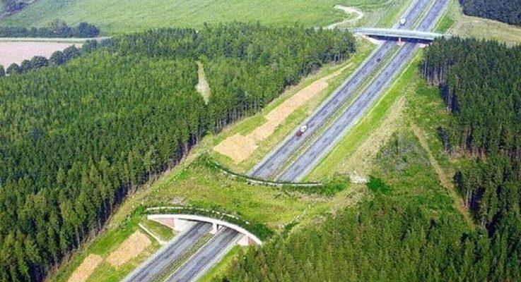 Che funzioni hanno i ponti verdi?
