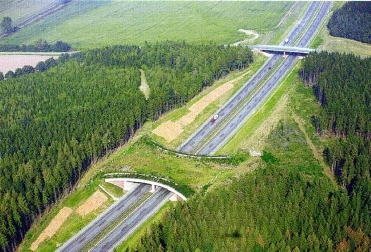 A cosa servono i ponti verdi?