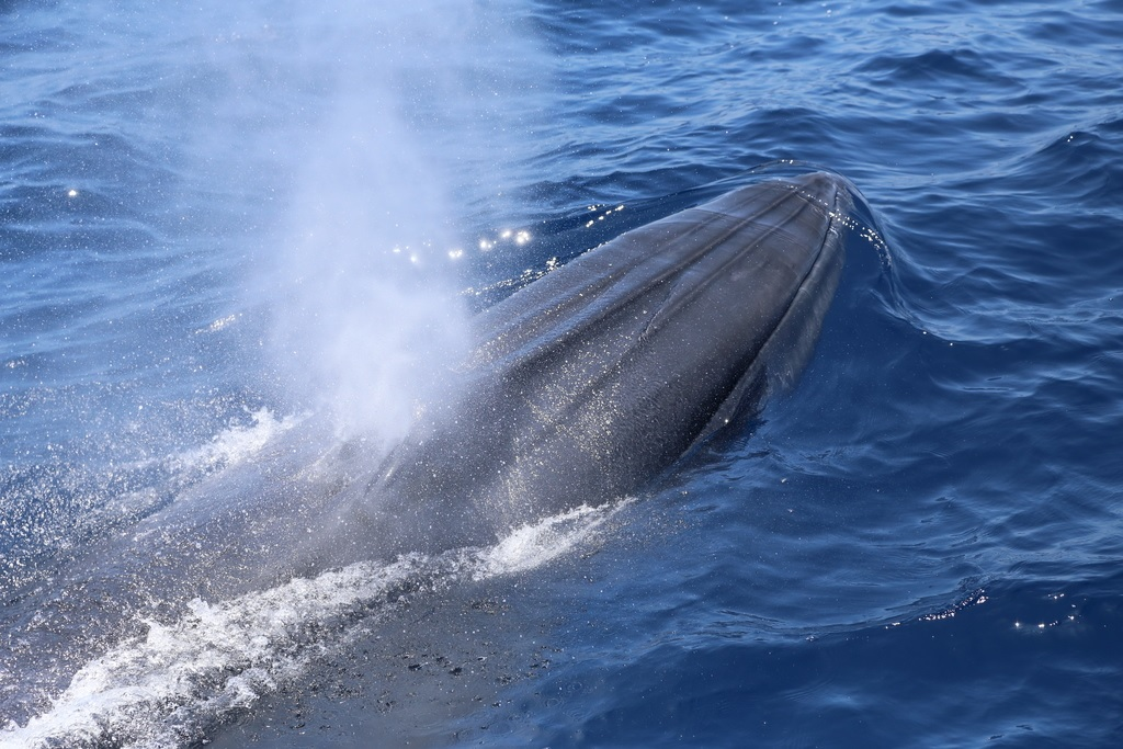 Cosa spruzzano le balene?