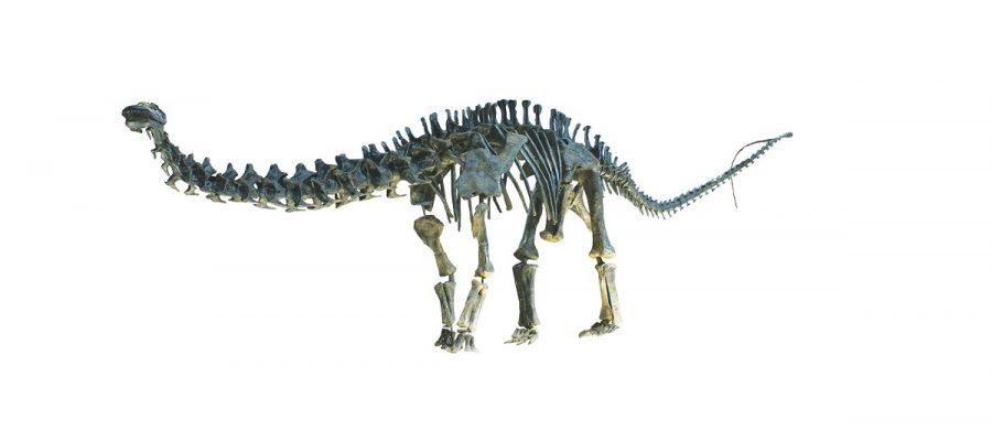 Abbiamo mai assemblato male i reperti fossili di un dinosauro?