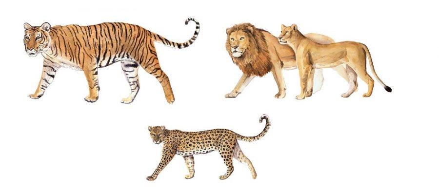 Chi era l'antenato dei felini?