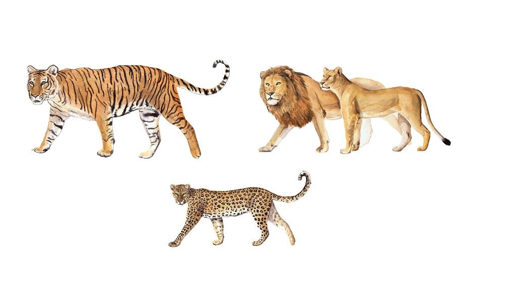 L'antenato dei grandi felini