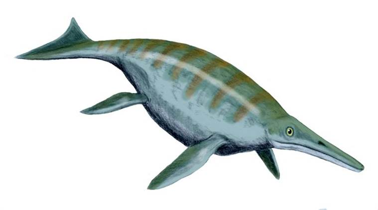 Raffigurazione di un ittiosauro