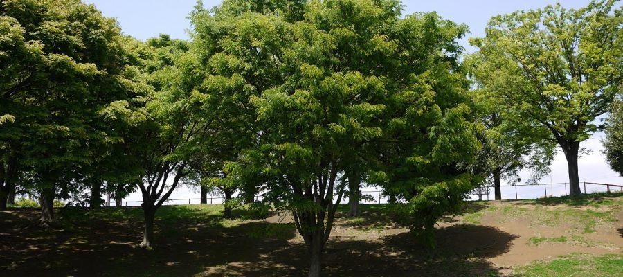 Tra un secolo useremo gli alberi come cibo?