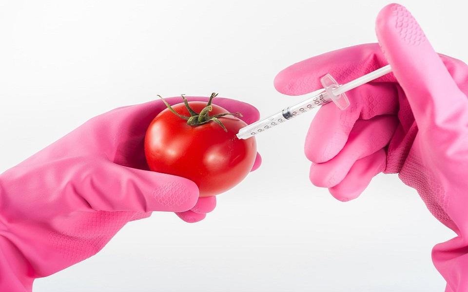 Gli OGM sono sterili?
