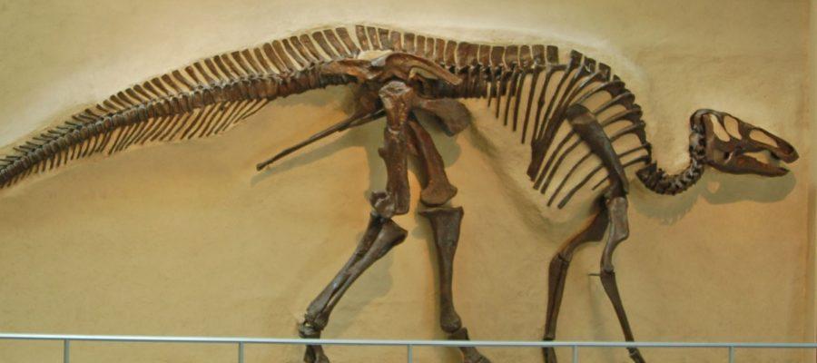 Quali sono stati i dinosauri più diffusi sulla Terra?