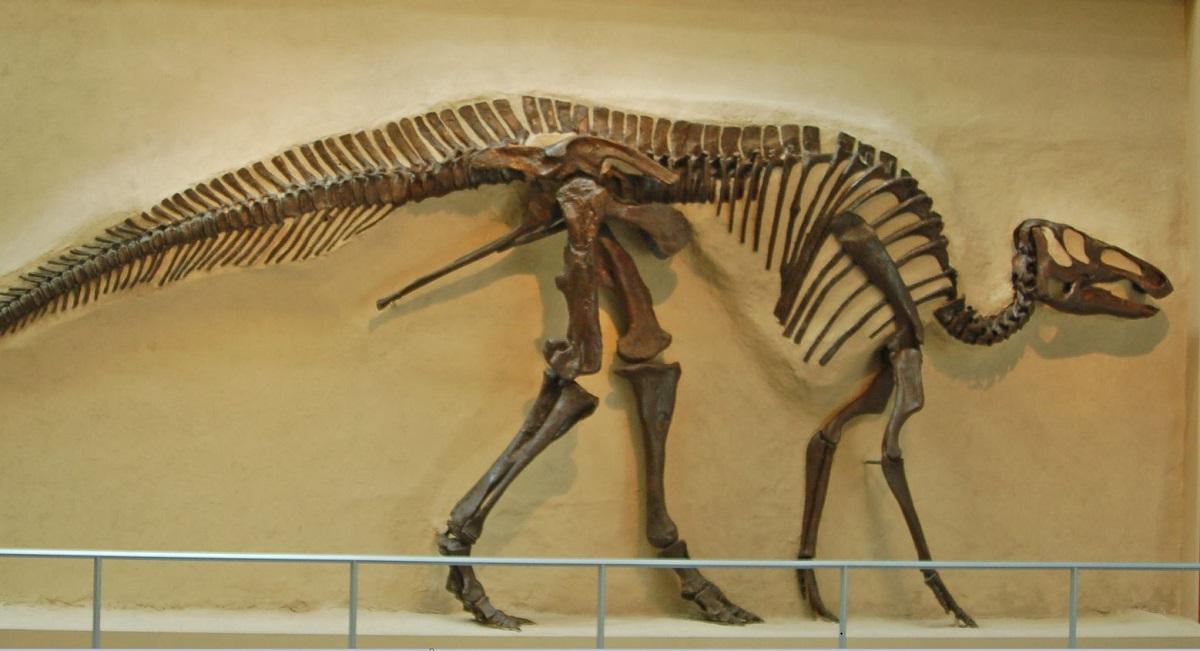 Quali sono stati i dinosauri pi diffusi sulla terra il for Quali sono i rettili