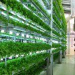 Cosa sono le vertical farming?