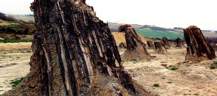 Cos'è una foresta fossile?