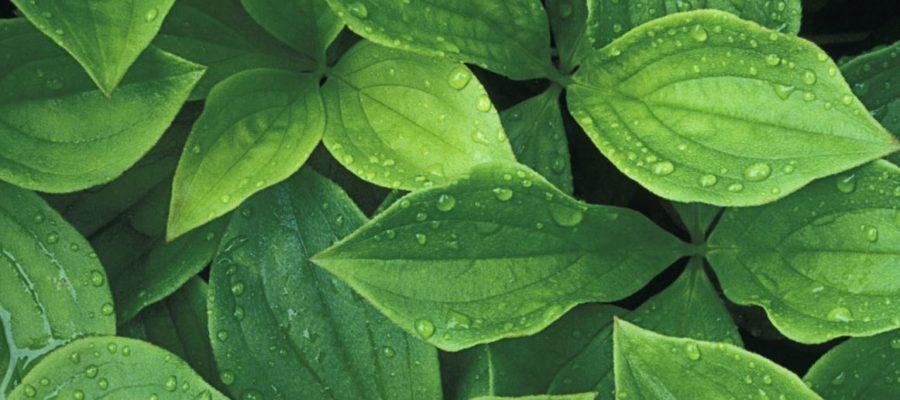 Le piante sanno prendere decisioni?