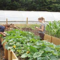Coltivare l'orto fa bene alla salute?