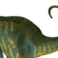 Come usavano la coda i dinosauri?