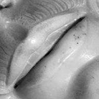 Perché il Cristo della Pietà ha un dente in più?