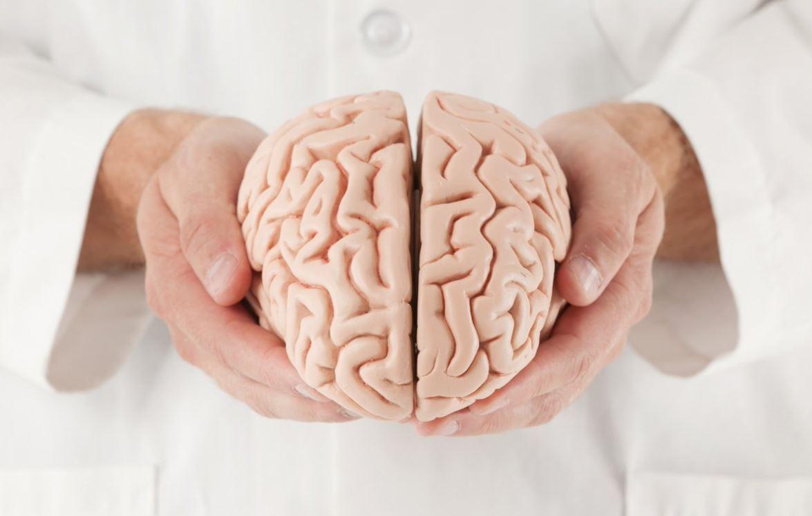 Sì può donare il cervello?