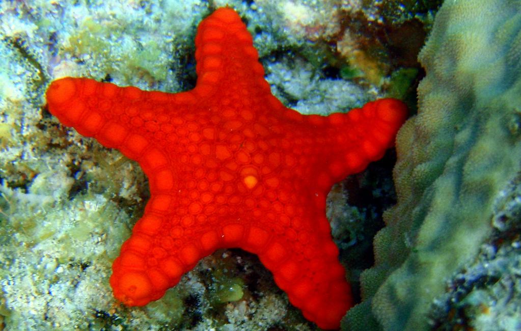 Una stella marina