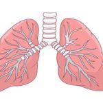 Come funzionano i polmoni?