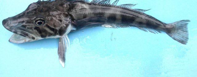Come sopravvivono i pesci dei mari polari alle basse temperature dell'acqua?