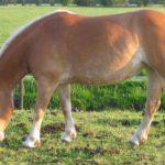 Quando è stato addomesticato il cavallo?