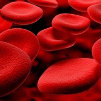 Perché i globuli rossi non hanno il nucleo?