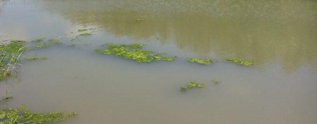 Quali tipi di inquinanti vengono ritrovati nei fiumi?