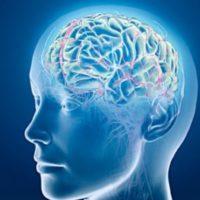 Quale parte del cervello elabora i sogni?