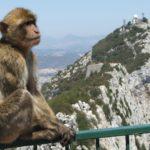 Ci sono scimmie in Europa?