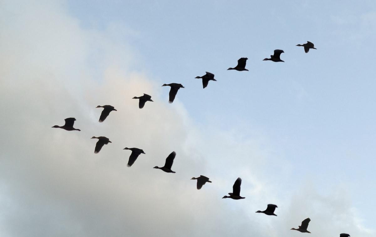 Il volo degli uccelli