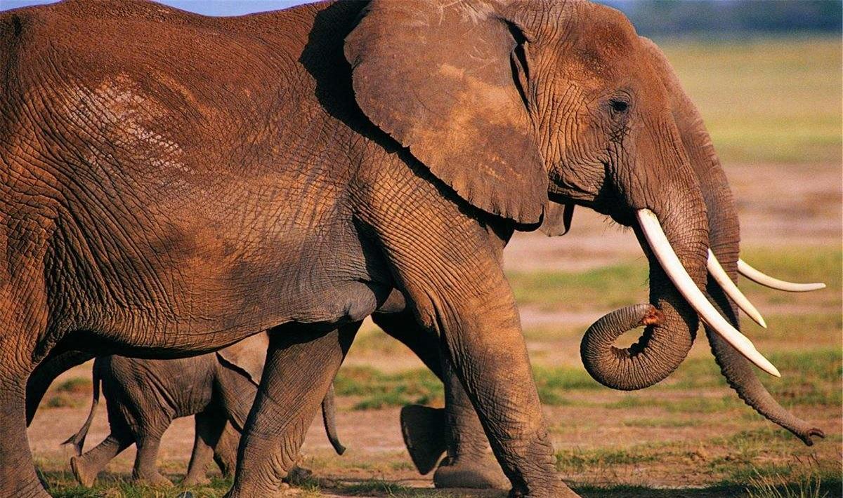 L'intelligenza degli elefanti