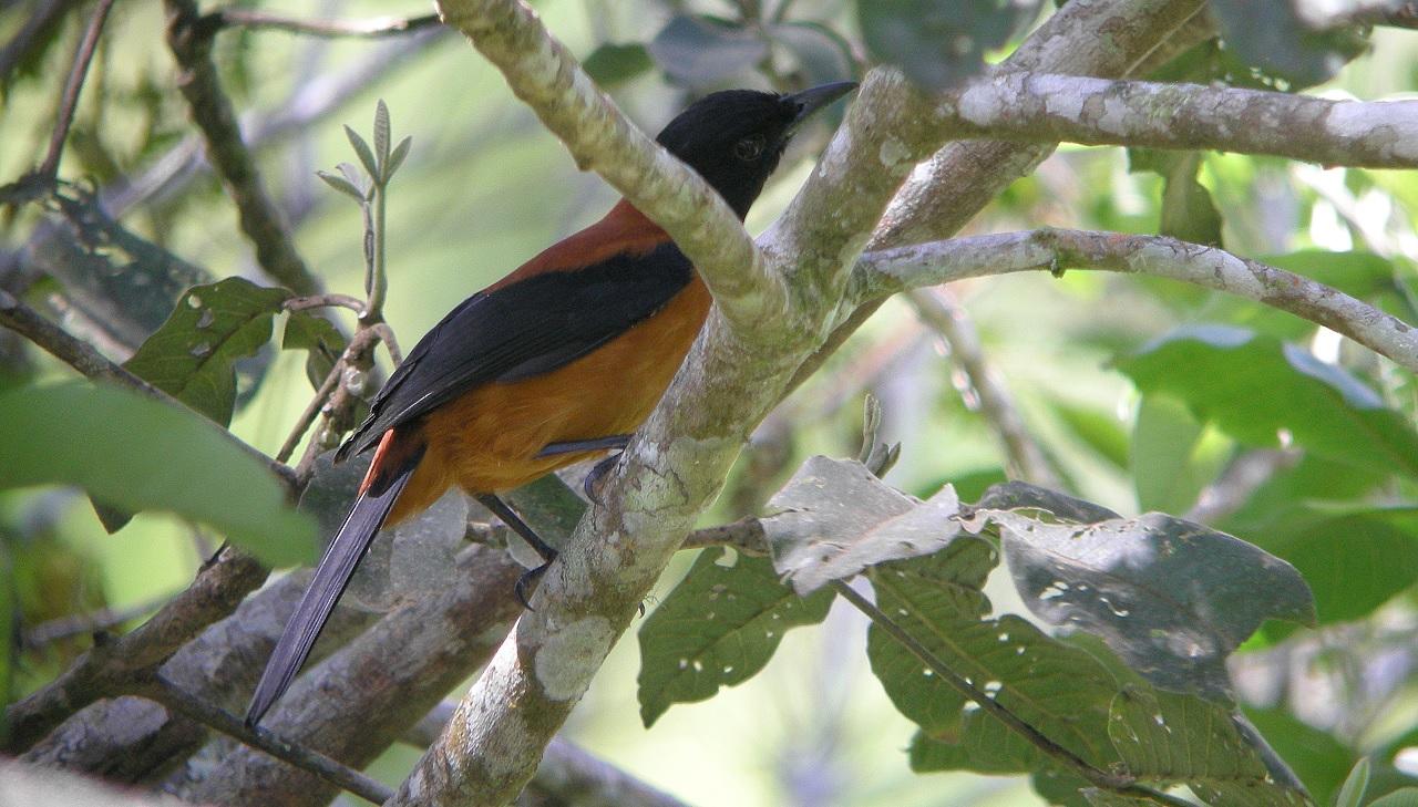 Ci sono uccelli velenosi?