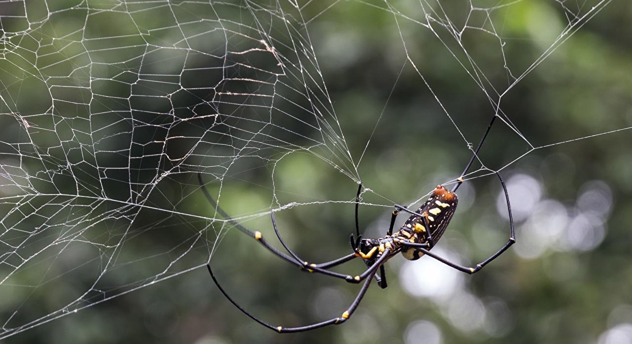 La ragnatela dei ragni