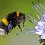 Perché in Germania stanno scomparendo gli insetti?
