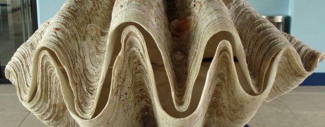 Qual è il mollusco bivalve più grande del mondo?
