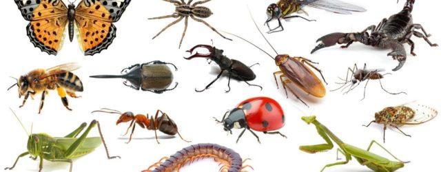 Quali sono le specie più numerose al mondo?