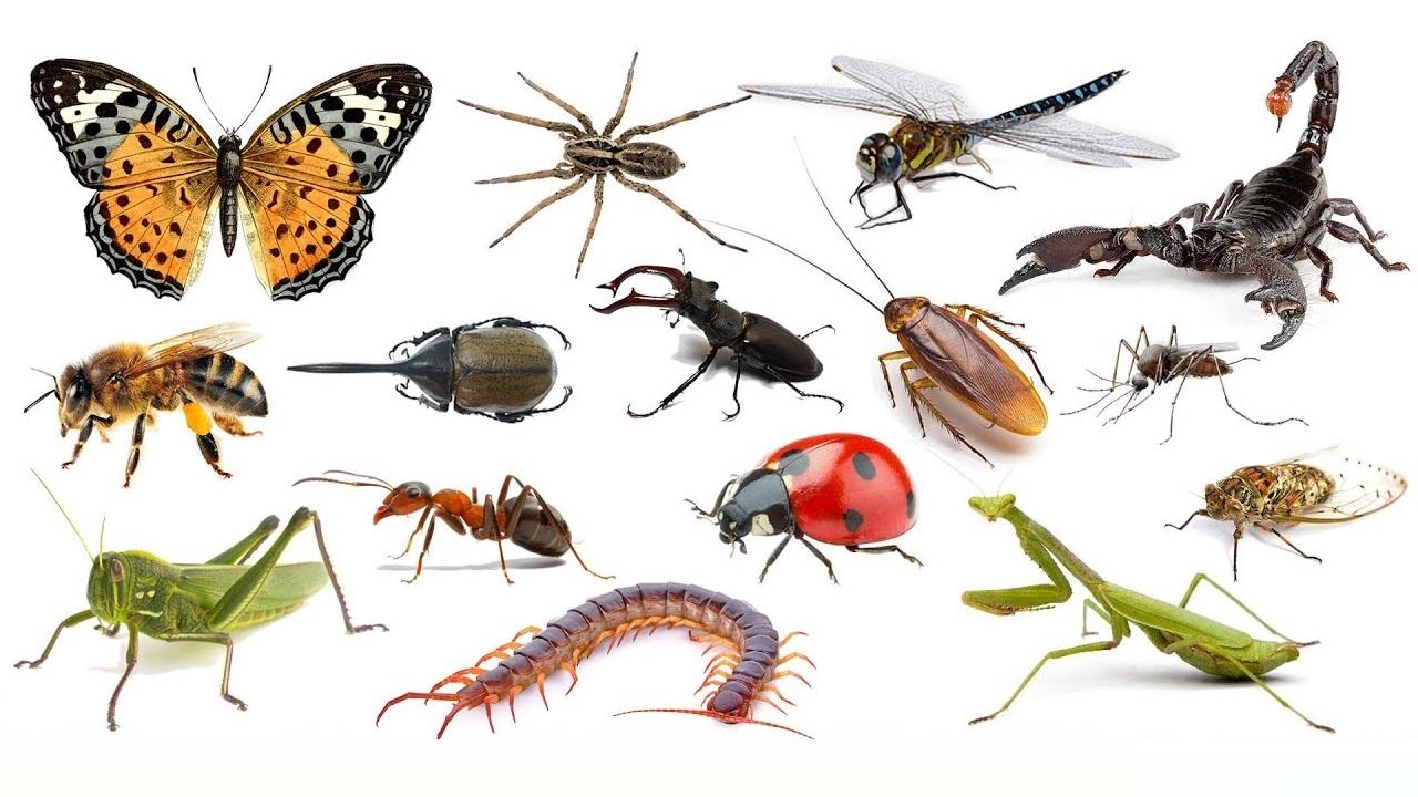 Specie più diffusa al mondo