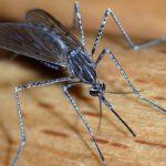 Perché ci sono le zanzare in estate?