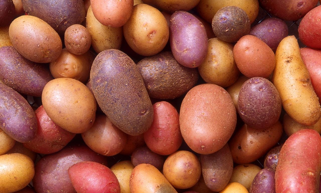 Quante varietà di patate esistono?