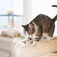 """Perché il gatto """"fa la pasta""""?"""